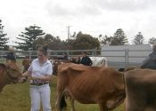 portfairyshow-cattle.jpg